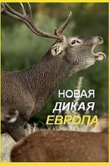Новая дикая природа Европы