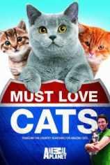 Кошек не любить нельзя
