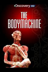 Механизм тела